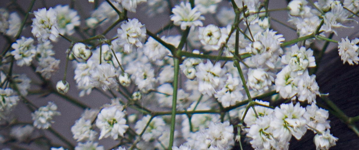 beauty photoshoot gypsophila
